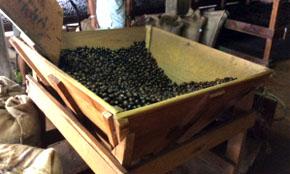 Nutmeg Processing