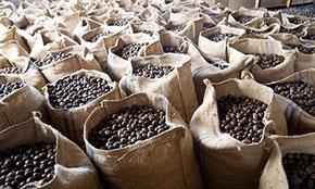 Nutmeg Ready Stock from India